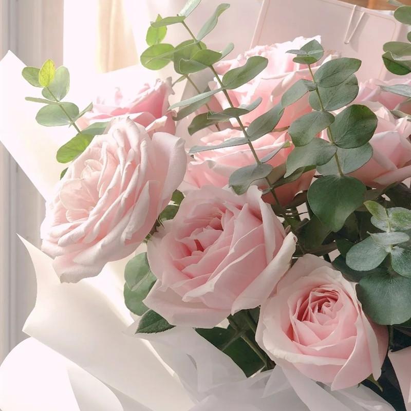 美不胜收——19支精品粉玫瑰