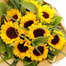 美好祝福——9支精品向日葵产品