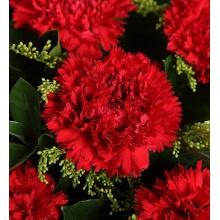 幸福彼岸——红色康乃馨11枝